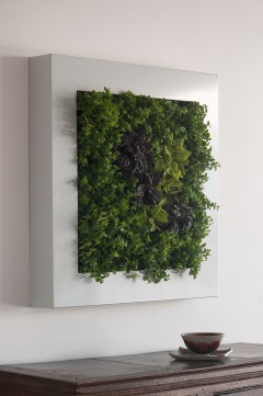 hängender Garten, lebendes Pflanzenbild